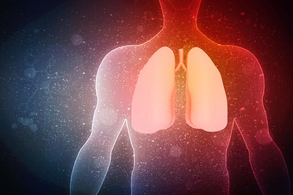 人体解剖図と肺