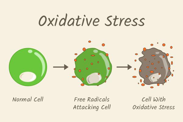 酸化ストレスのメカニズムの図解