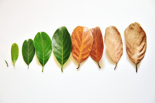 葉っぱのターンオーバー
